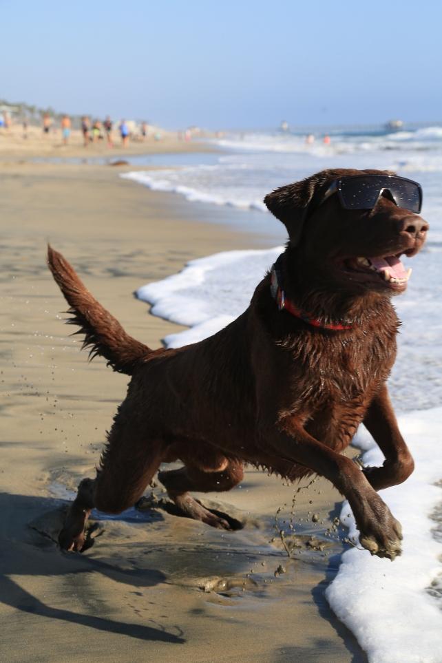 Bono, o Cão Surfista